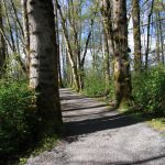 The trail in Brae Island Regional Park